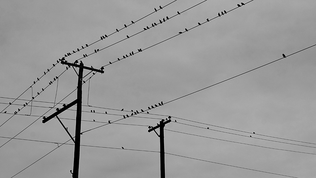 http://johnbryantart.org/files/gimgs/12_birds-on-wire-web.jpg